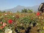 petani-bunga-desa-sidomulyo-kota-batu.jpg