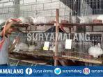 peternak-kelinci-di-bumiaji-kota-batu-melakukan-sterilisasi-kandang-kelinci_20170515_205711.jpg
