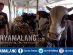 peternakan-sapi-di-kabupaten-malang_20180225_190049.jpg
