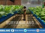 petugas-green-house-pertanian-mempersiapkan-tanaman-yang-siap-dipanen_20180412_190519.jpg