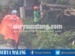 petugas-membersihkan-pohon-tumbang-di-jl-mandalika-kota-malang-minggu-532017_20170305_162210.jpg