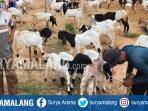 petugas-mengecek-kesehatan-kambing-di-pasar-gandusari-kecamatan-gandusari-trenggalek.jpg
