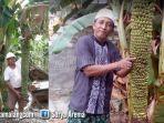 pisang-unik-di-dusun-glintung-desa-kepatihan-kecamatan-menganti-kabupaten-gresik_20181022_192035.jpg