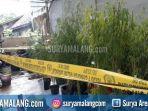 pohon-ganja-jl-jaya-srani-ix-kecamatan-pakis-kabupaten-malang_20180423_181720.jpg