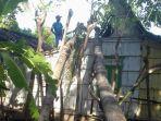 pohon-kelapa-tumbang-menimpa-rumah-di-desa-kecamatan-kendit-situbondo.jpg