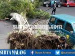 pohon-tumbang-di-jalan-diponegoro-kota-malang_20170208_172538.jpg