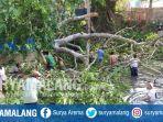 pohon-tumbang-di-pemandian-dusun-sangsang-desa-omben-kabupaten-sampang.jpg