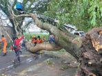 pohon-tumbang-jalan-mayjend-sungkono-kota-malang.jpg