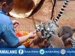 primata-secret-zoo_20180130_212157.jpg