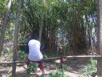 rimbunan-pohon-bambu-diduga-tempat-hilangnya-bocah-di-mojokerto.jpg