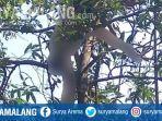 soe-djianbayan-meninggal-di-atas-pohon-di-belakang-rumahnya-jalan-ratulangi-kota-kediri.jpg