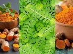 tanaman-herbaldaftar-6-tanaman-herbal-dipercaya-bisa-tingkatkan-imunitas-cegah-covid-19.jpg