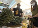 tanaman-hias-kaktus-unik.jpg