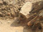 temuan-batu-andesit-situs-kumitir-mojokerto.jpg