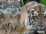 teror-hewan-di-indonesia.jpg