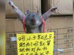 tikus-dihukum-karena-mencuri-beras_20170124_142352.jpg