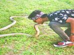 ular-king-cobra-saat-car-free-day-cfd-di-bundaran-besar-palangkaraya_20180710_234742.jpg