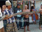 ular-piton-phyton-snake-dragon-lamongan_20180803_135036.jpg
