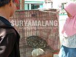 ular-piton-selanjang-lima-meter-di-desa-bungurasih-utara-kecamatan-waru-sidoarjo.jpg