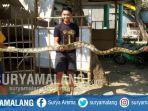 ular-piton-sepanjang-empat-meter-di-desa-jampirogo-kecamatan-sooko-kabupaten-mojokerto.jpg
