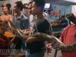 ular-piton-warga-desa-randuagung-kecamatan-kebomas-gresik.jpg