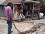 ular-yang-ditangkap-warga_20170424_180440.jpg
