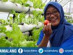 unit-percontohan-pertanian-hidroganik-kota-malang_20180407_134907.jpg