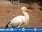 white-stork-di-eco-green-park-kota-batu.jpg
