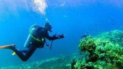 Keindahan Bawah Laut Bangsring Underwater Banyuwangi  Kian Mendunia