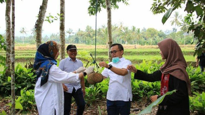 Pecinta Durian Di Banyuwangi Tak Usah Galau Ada Durian Daring Juga Layani Diluar Banyuwangi