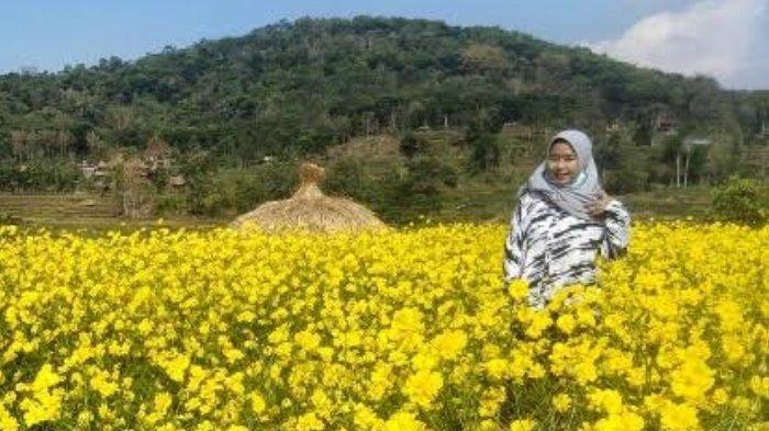 Berburu Foto Instagramable Berlatar Hamparan Bunga Kenikir di Taman Bunga Refugia Mojokerto