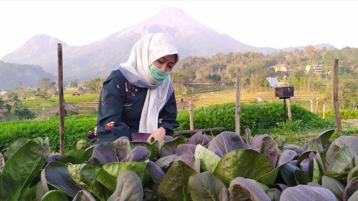 Wisata Kampung Organik Brenjonk Siapkan Protokol Kesehatan Jelang Libur Panjang