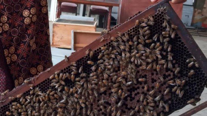 Belajar Cara Merawat Lebah Madu di Wisata Petik Madu Agro Tawon Lawang