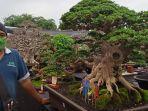 pameran-bonsai-lumajang.jpg