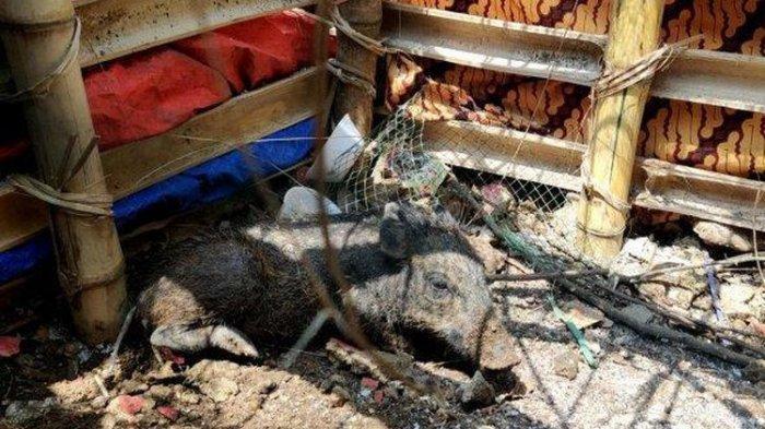 Viral karena Tuding Tetangga 'Nganggur Banyak Duit' Pakai Babi Ngepet, Ibu Ini Akhirnya Minta Maaf