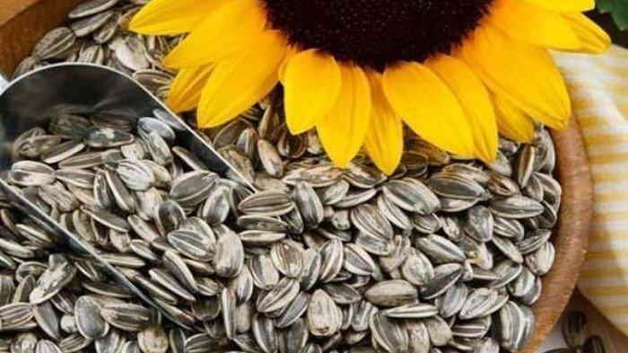 Tak Hanya Enak, Biji Bunga Matahari Juga Miliki 14 Manfaat Hebat untuk Kesehatan Ini