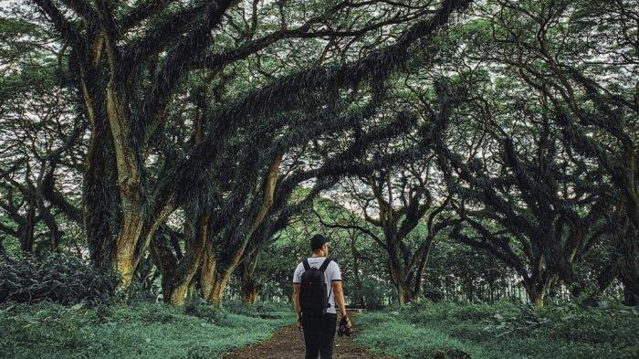 38 Obyek Wisata Alam Ini Buka Kembali dengan Protokol Kesehatan, De Djawatan hingga Talaga Warna