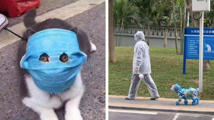 Tak Kalah dari Majikannya, Cegah Virus Corona, Kucing di China Ikutan Kenakan Masker, Ini Kata Ahli