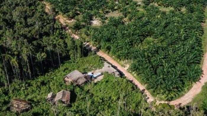 Tagar #SavePapua Trending di Twitter, Hutan Adat di Papua Habis demi Perluasan Lahan Kelapa Sawit?