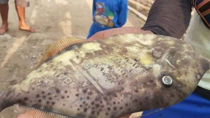 Ikan Bertuliskan 'Ambon' dan 'Maluku' Ditemukan Nelayan, Ini Penjelasan LIPI