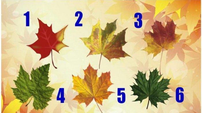 Tes Kepribadian: Pilih Daun Maple yang Kamu Suka, Cari Tahu Nasihat Apa yang Kamu Butuhkan