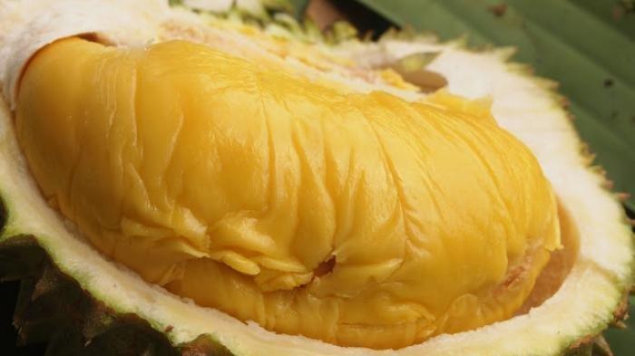 6 Perbedaan Durian Musang King Dan Durian Lokal