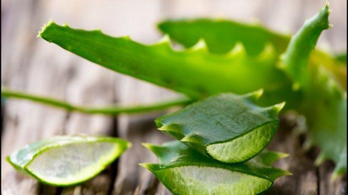 8 Tanaman Herbal Terpopuler di Indonesia dan Manfaat Kesehatannya