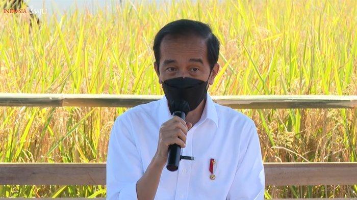 Presiden Joko Widodo (Jokowi) tinjau panen raya di Desa Wanasari, Indramayu, Jawa Barat.