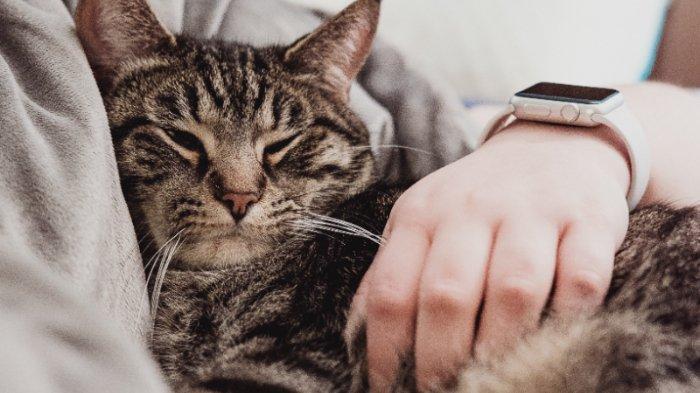 Bolehkah Ibu Hamil Memelihara Kucing, Apa Risikonya? Ini Penjelasannya
