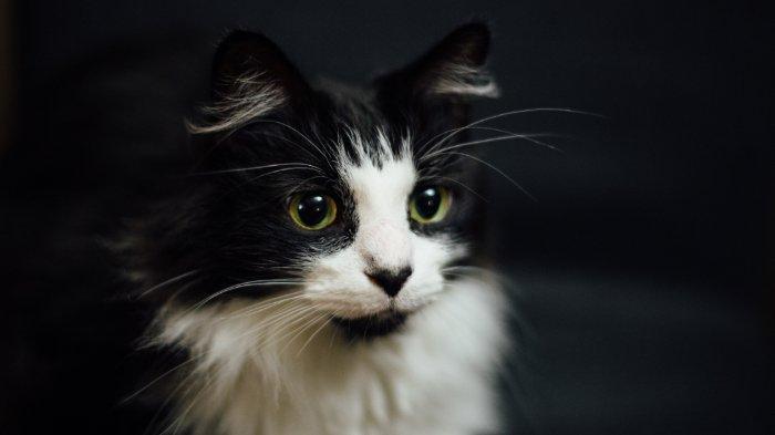 Ini Spirit Animal yang Ada Dalam Dirimu Sesuai dengan Zodiak: Scorpio Mirip Kucing yang Misterius!