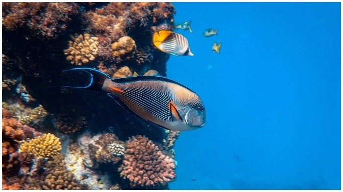 Sama Bahayanya dengan Krisis Iklim, Polusi Suara yang Ditimbulkan Manusia Ancam Kehidupan di Laut