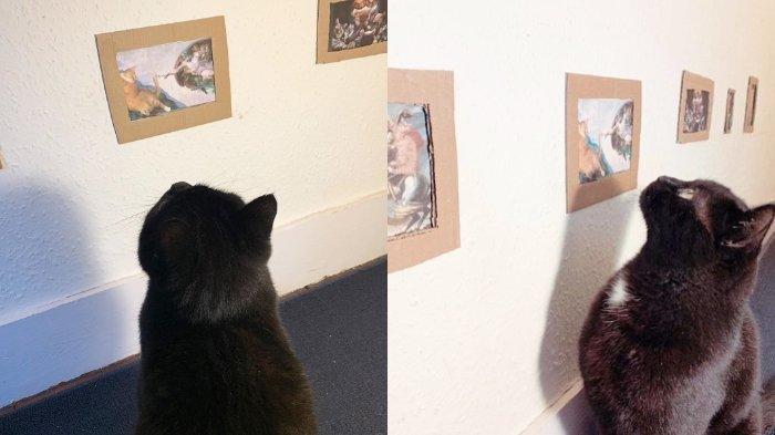 Agar Kucingnya Tak Bosan di Rumah, Komedian Inggris, Jake Lambert dan Kekasihnya Nekat Buat Museum