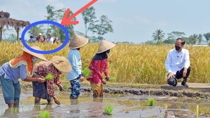 Komentari Foto Jokowi Saat Tinjau Petani di Malang, Roy Suryo: Sebaiknya Istana Edit Foto Lebih Rapi