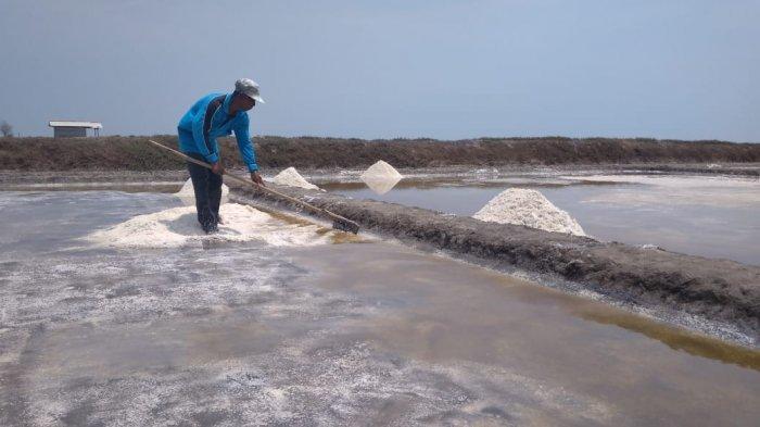 Kebijakan Impor Garam Tuai Kritikan dari Ketua MPR RI dan Anggota DPR Komisi VI